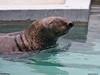 Orkeny born l970 Grey Seal 10-20-10