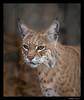 Inti- Bobcat 8-26-13